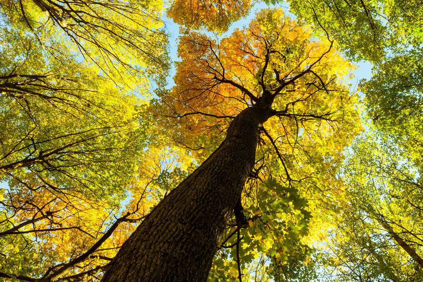 Parkett als Naturprodukt aus Bäumen